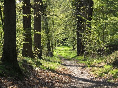 file forest path in yvelines france jpg wikimedia commons
