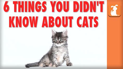 8 Things You Didnt About And Attraction by 6 Things You Didn T About Cats Kitten