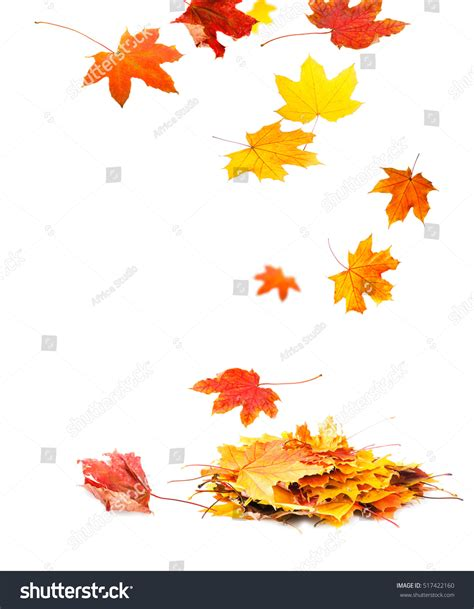 Autumn Leaves On White Background Stock Photo 517422160 Shutterstock Fall Leaves On White Background