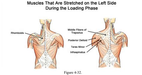 what muscles do you use to swing a bat workouts for the shoulders chest arms