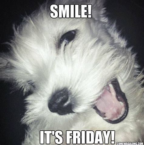 Friday Dog Meme - smile its friday pictures photos and images for facebook