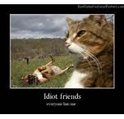 Idiot Friends Best Demotivational Posters