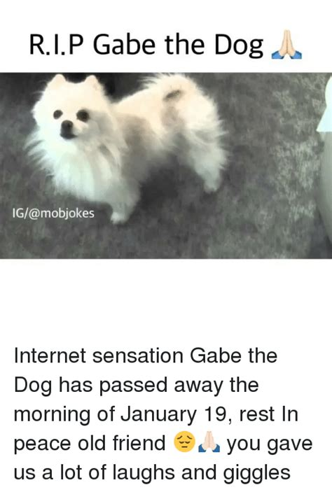 gabe the meme 25 best memes about gabe the gabe the memes