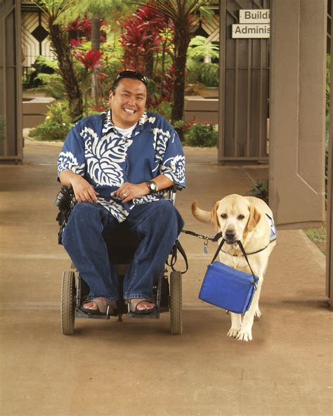 service dogs service dogs assistance dogs hawaii assistance dogs hawaii