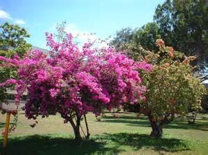 pretty trees palmetum