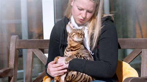 alimenti per gatto alimenti e diete delle migliori marche per gatti comuni e