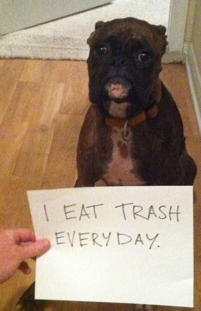 gets into trash shaming 10 photos thatmutt a