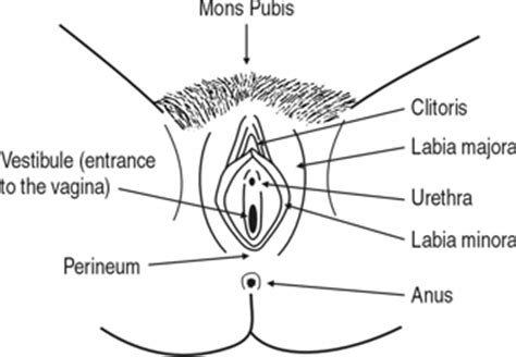 where is the clitorus diagram how to perform vulval self examination vulval society