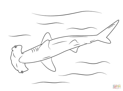 Great White Shark Coloring Page Hammerhead Online sketch template