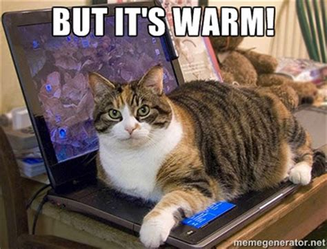 Cat Laptop Meme - cat memes top 10 things cat owners can identify with