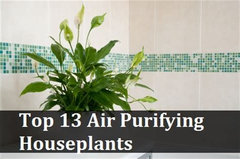 top house plants top 13 air purifying houseplants