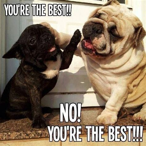 No You Are Meme - you are the best no you re the best wonderful dogs