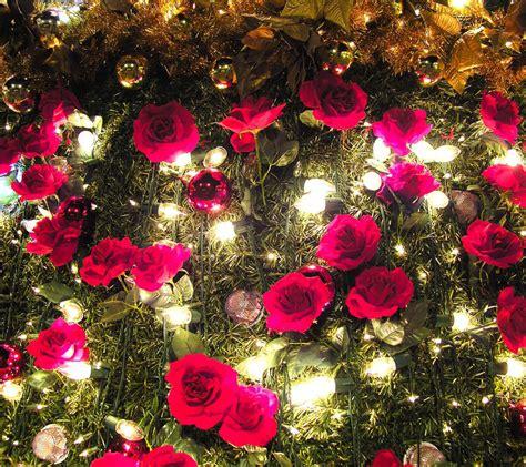 beautiful flowers image flowers for flower lovers beautiful flowers wallpapers