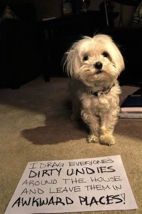 Dog Shaming Meme - 188 best images about pet shaming on pinterest dog
