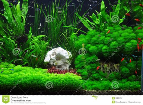 Aquarium Fish Model Cumi 13 Liter platies tetras et aquariums populaires dans aquascaping
