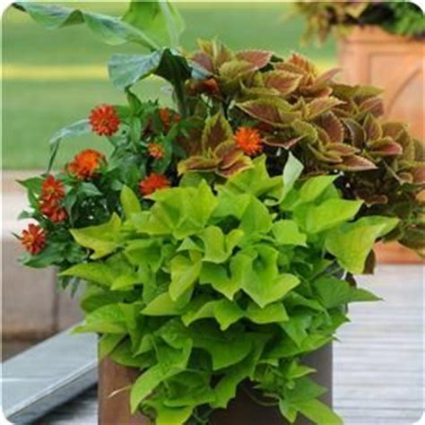 sun l for plants horticultural co great website for mixed container