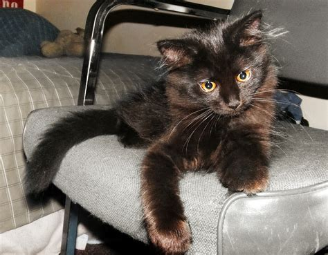 Cat On by File Black Cat On A Chair Jpg Wikimedia Commons