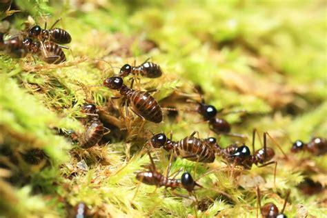 phoenix az termite pest control budget brothers termite