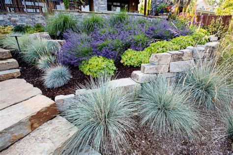 landscaping with ornamental grasses www pixshark com images galleries with a bite