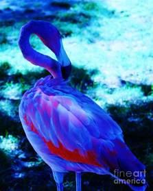 Bird Duvet Cover Blue Flamingo Photograph By Dawn Downour