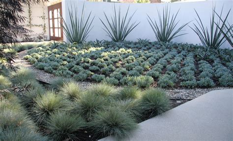 Drought Resistant Landscaping Ideas Drought Resistant Landscaping Ideas Landscaping Gardening Ideas