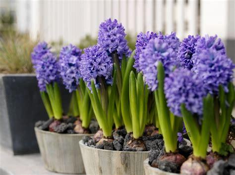 pflegeleichte pflanzen für den garten terrasse bepflanzen dekor