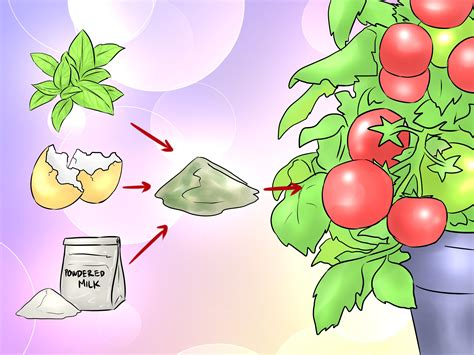 diy tomato fertilizer how to make plant fertilizer 9 steps with pictures