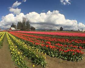 The Cider Barn What To Do At The Skagit Valley Tulip Festival Travel