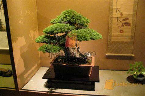 santigi tanaman bonsai bonsai murah bonsai kab sidoarjo