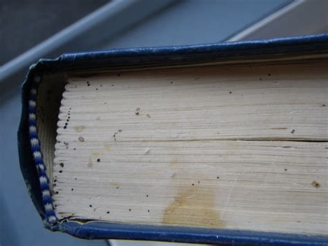bed bugs in books your book may be infested with bedbugs and here s how to