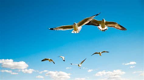 imagenes de jordan volando aves volando 861 brisa andina