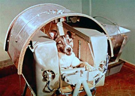 laika the laika the animal in space
