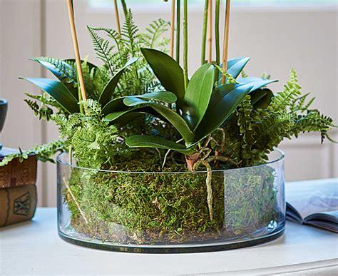 Orchid Planters Uk by Bloom Orchid Fern Garden Arrangement Artificial Flower