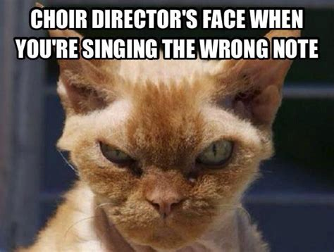 Choir Memes - mean cat face chorus angelicus at our lady of the