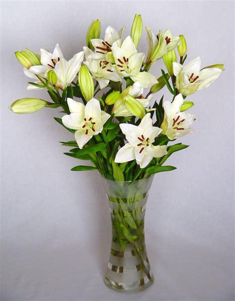 imagenes de lilis blancas azucena lilium vocaci 243 n de jardinero