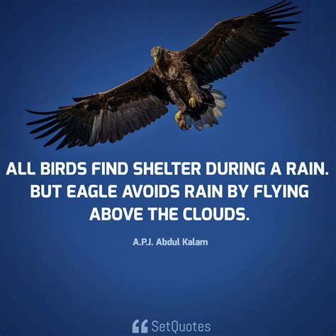 comfort eagle meaning all birds find shelter during a rain but eagle avoids