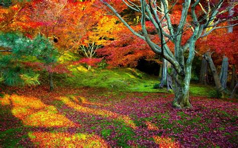 nature colors all the colors of autumn in the woods wallpapers and