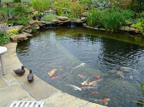 Backyard Pond Pool 17 Best Ideas About Koi Ponds On Koi Fish Pond Ponds And Outdoor Fish Ponds