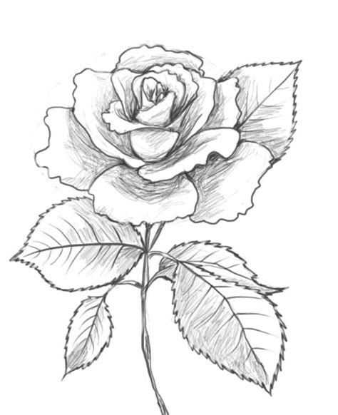 Drawing Roses by And Drawing Printable Coloring Of