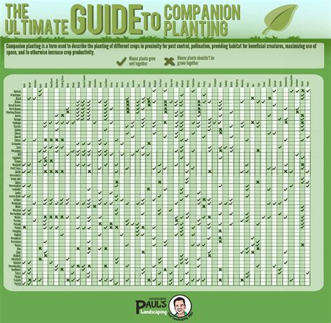 growing chart guide to companion planting