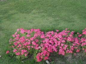 file pink flowers shrub jpg