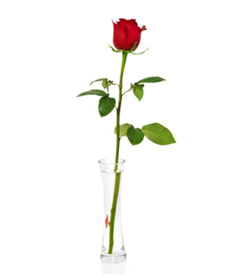 single red rose at from you flowers