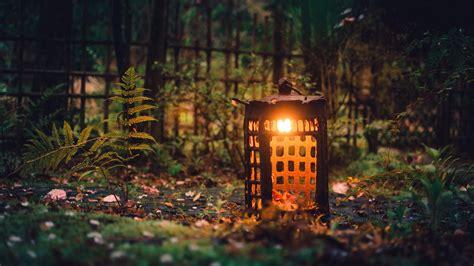 nature landscape trees forest ferns lantern fence
