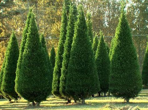 christmas tree farms in southeast michigan tree farms