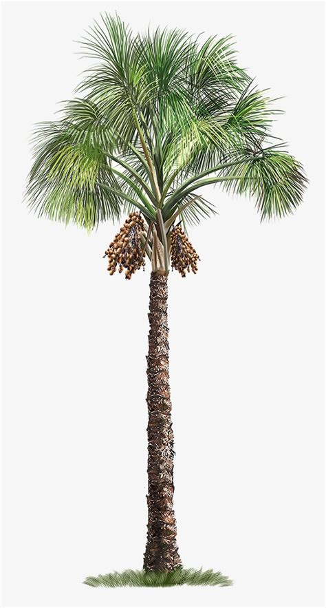 tree tree palm tree trees painted tree png image for free