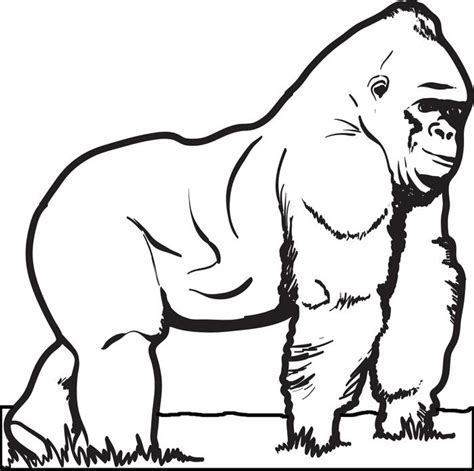 coloring page for gorilla free printable gorilla coloring page for kids