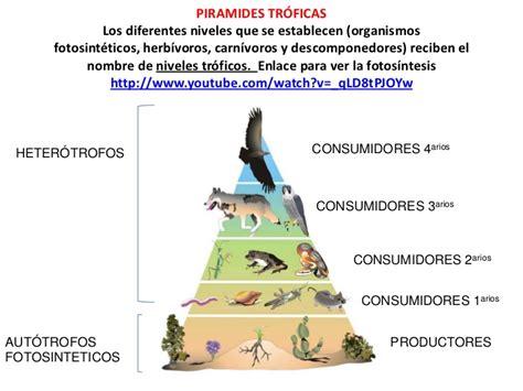cadenas alimentarias piramides ecologicas piramide trofica ejemplo imagui