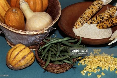 iroquois uses of maize and other food plants classic reprint books traditional iroquois food stock photo getty images