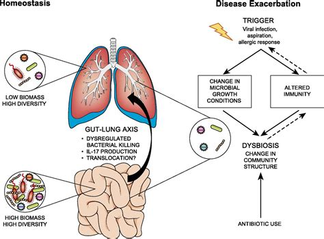 Biomars Lung the lung microbiome immunity and the pathogenesis of chronic lung disease the journal of