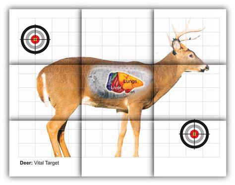 printable deer shooting targets deer vitals target free printable shooting targets